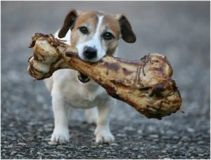 Read more about the article What Are Some Good Sources of Calcium for My Dog?