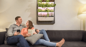 Read more about the article Herbitat Smart Hydroponic Indoor Garden lets you grow your own produce easily at home